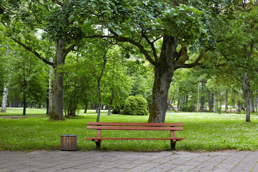 A bench in a park along a walking trail.